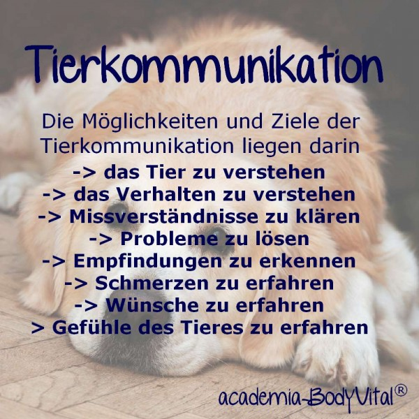 Tierkommunikation Seminar