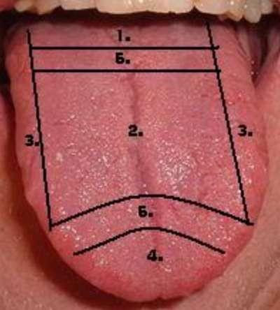 Chakrendiagnose Basiskurs
