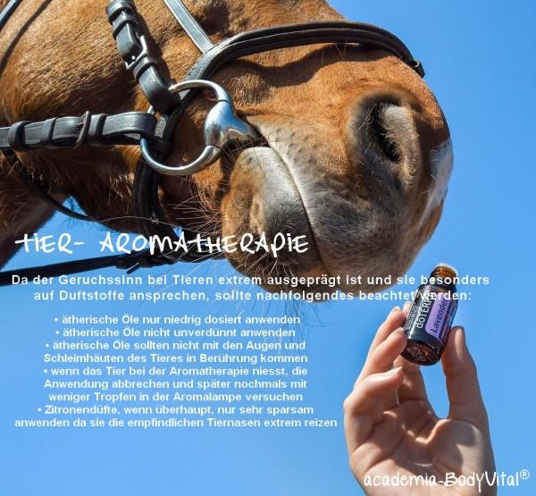 Tier- Aromatherapie Seminar
