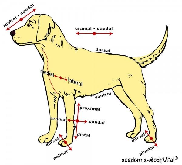 Hunde- Anatomie Basiskurs