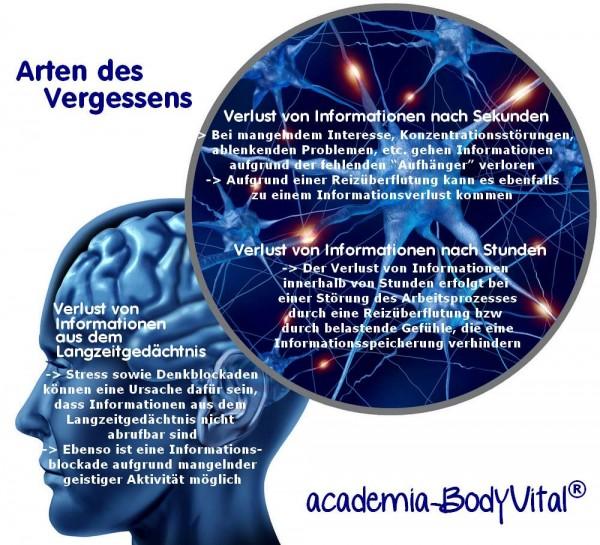 Ganzheitliches Hirnleistungstraining Seminar