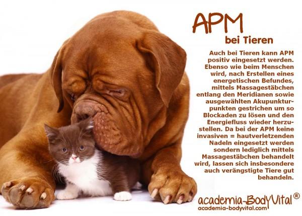 Tier- APM Basiskurs