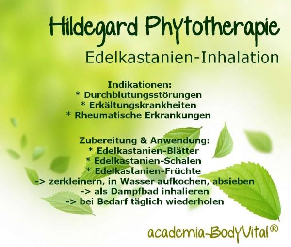 Hildegard von Bingen Phytotherapie Seminar