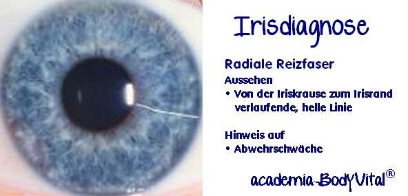 Irisdiagnose Basiskurs